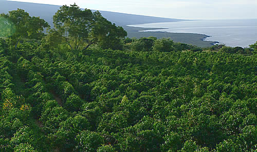 Farm Land For Sale Big Island Hawaii